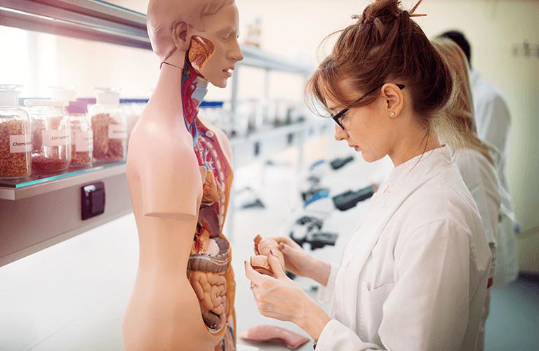 解剖学を学んでいる風景